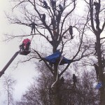 The Battle for the Trees at Tot Hill, Newbury