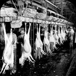 Chicago's Meatpacking Death Factory, 1904